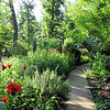 2009 Bluebird Cove Garden : The garden wonders in our own backyard which is a Certified Backyard Habitat with NWF.