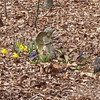 Skipper's Grave with Spring Flowers