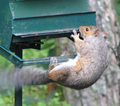 2007 - The Squirrel, The Feeder and God