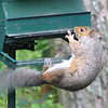 2007 - The Squirrel, The Feeder and God : Picture Story - Squirrel Talks To God  8-10-07