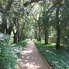 Aiken, SC - Hopeland Gardens : 14 acre garden in city donated from private estate - May 15, 2010