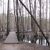 Canadys, SC - Colleton State Park : Nice stop-off from I-95 travel.  Has a canoe and kayak trail.  3-2-10