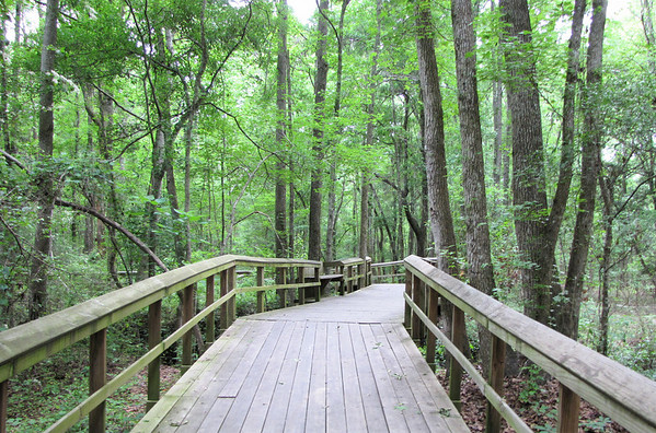 Walterboro, SC - Great Swamp Sanctuary