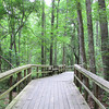 Walterboro, SC - Great Swamp Sanctuary : This place is within the city limits and near neighborhoods.  May 10, 2010