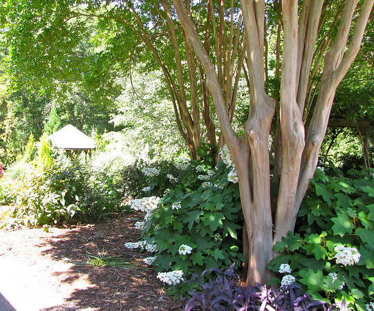 Spartanburg, SC - Hatcher Garden & Woodland Preserve