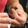 Charlottesville, VA - Monarch Tagging at Ivy Creek Preserve : At Ivy Creek Natural Area    9-28-08