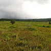 Last Views of Big Meadows on Our Ranger Walk - Shenandoah National Park - Milepost 51
