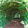A Grand Arbor Reminds Me of a Covered Bridge - Tuckahoe, Thomas Jefferson's Boyhood Home - Richmond, VA