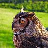 Charlottesville, VA - The Wildlife Center Event at Carter Mt. Orchards : June 9, 2012 - View more photos of The Wildlife Center or visit their website: The Wildlife Center.