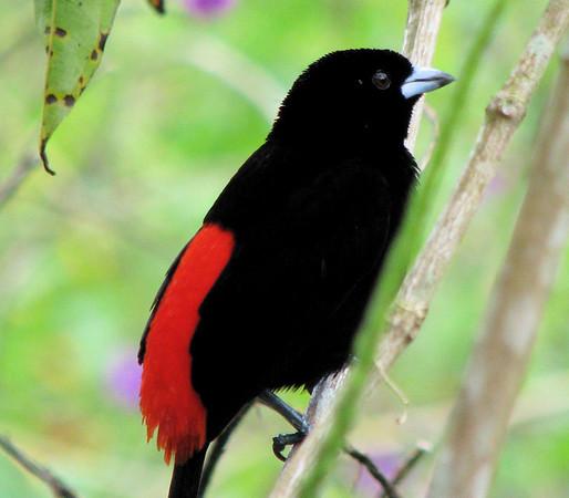 La Selva - Birds, Bugs and Animals