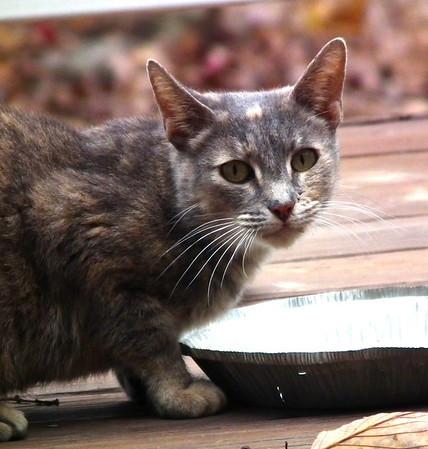 Visiting Stray Cats
