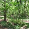Woodland Trails - Native Plant Botanical Garden - GA Perimeter College, Decatur, GA